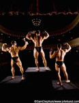 Three body builder champions are on stage flexing their muscles for the audience. The three men all have huge muscles. The picture was taken from behind the men. Body builders in the spot light.